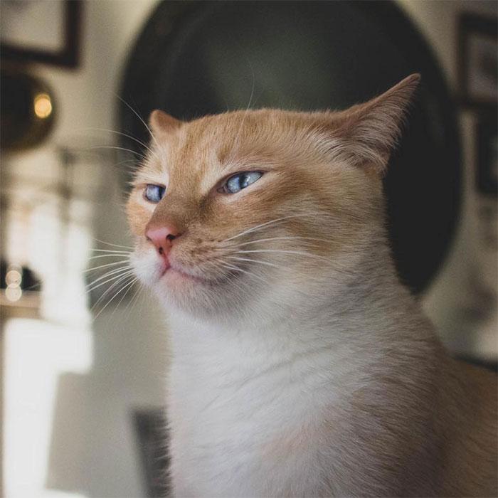 Ce chat est obsédé par les bananes et il est devenu viral à cause de ses photos «indécentes»