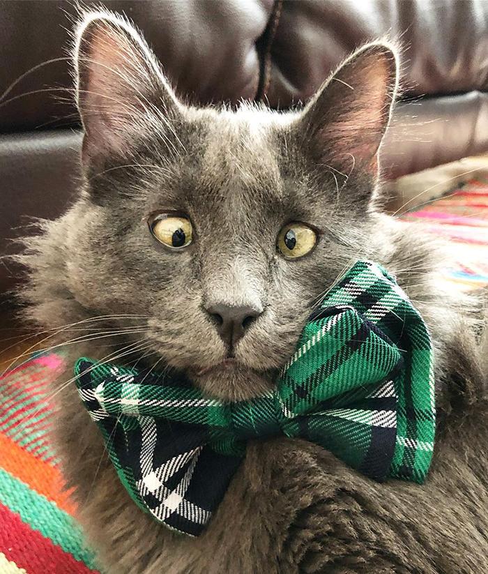 Voici Belarus, un adorable chat aux yeux croisés qui a volé le coeur des internautes