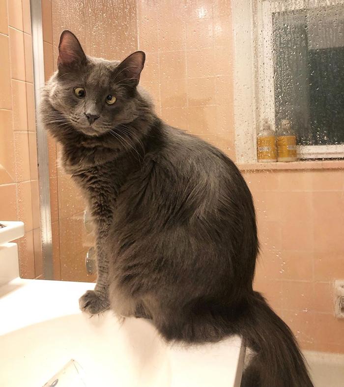 Voici 15 photos de Belarus, un adorable chat aux yeux croisés qui a volé le coeur des internautes