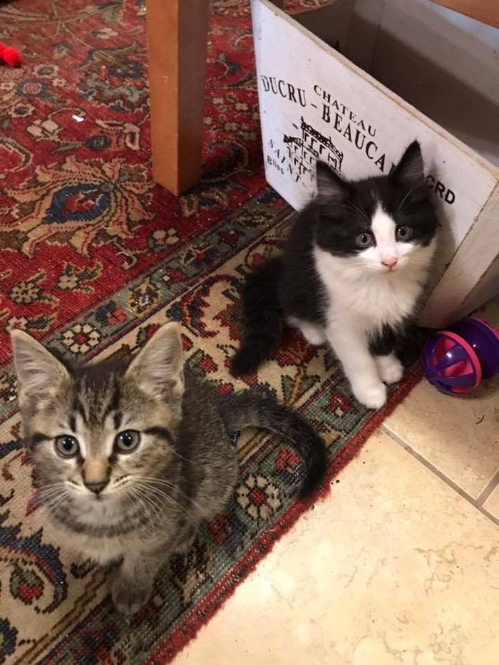 Des chatons se promènent librement dans cette librairie au Canada et les clients peuvent même les adopter