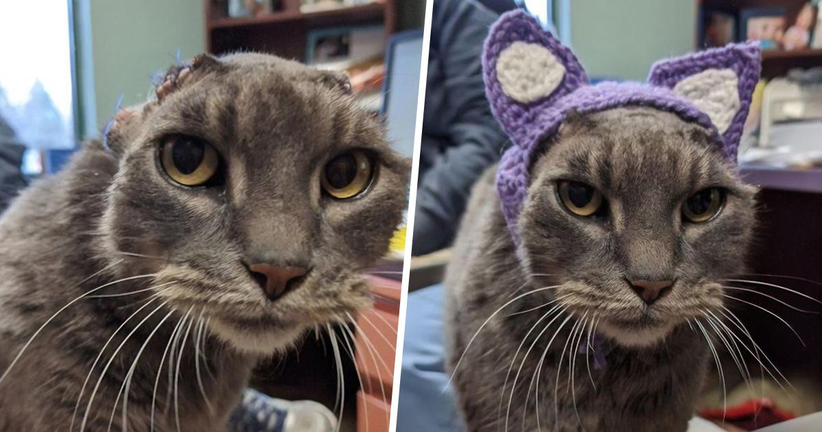 Cette chatte errante a reçu des oreilles crochetées et s'est enfin trouvé une maison