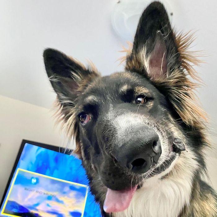 Ce chien a enfin été adopté après que l'attaque de sa mère ait déformé son visage
