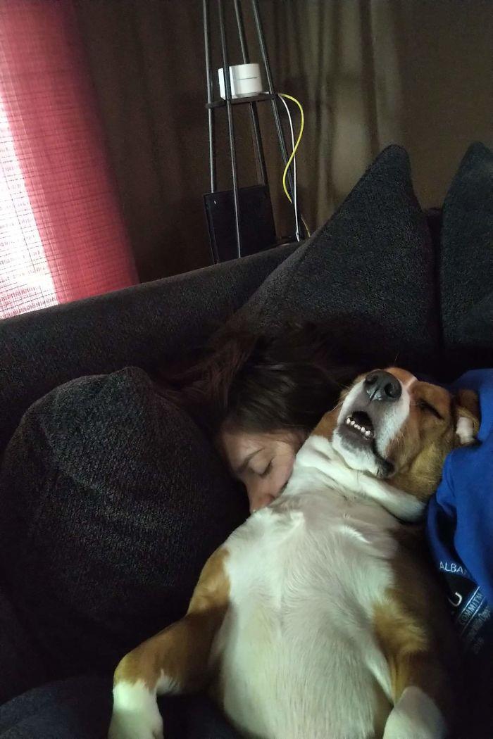 Cette communauté en ligne partage les photos de chiens les plus drôles où leurs dents sont visibles d'une manière amusante (30 images)