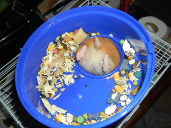 30 paires de fesses de hamsters pour ajouter un peu de douceur à ta journée