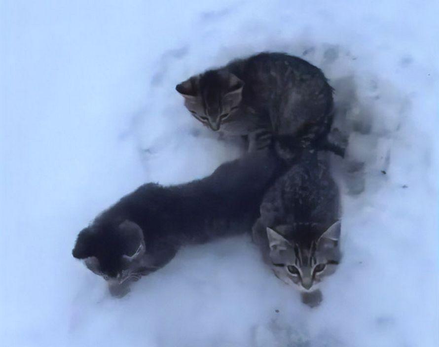 Cet homme a utilisé du café chaud pour sauver 3 chatons qui étaient gelés au sol depuis des heures