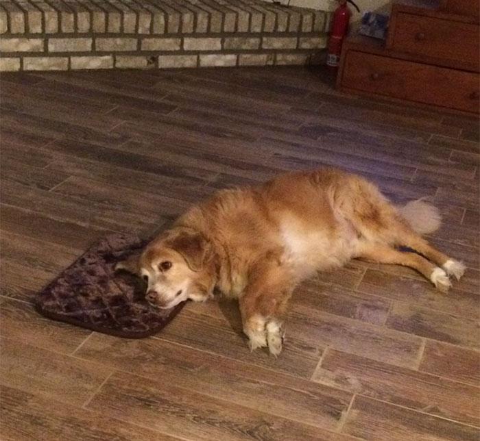 Une femme a accidentellement commandé un minuscule lit pour son chien et il a fait semblant que tout allait bien