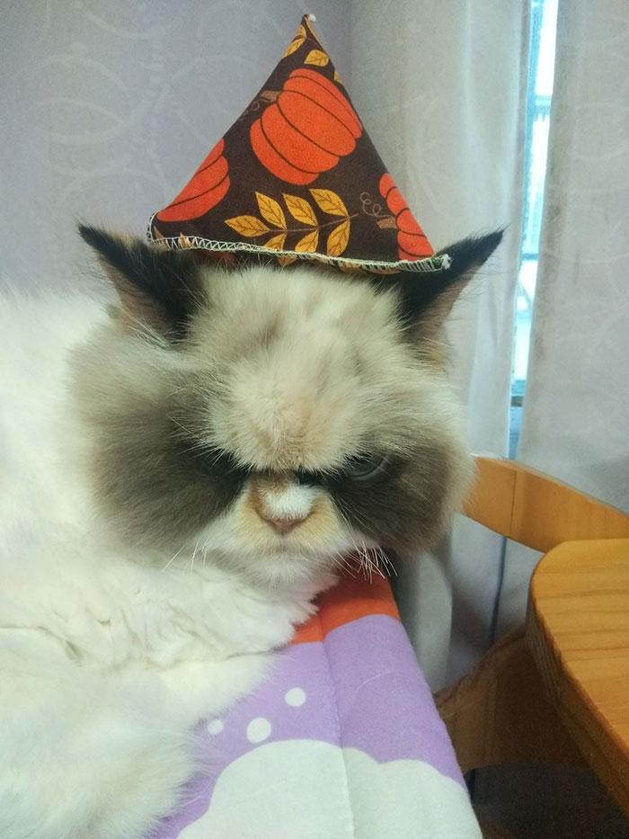 Voici le nouveau Grumpy Cat qui a l'air encore plus fâché que son regretté prédécesseur
