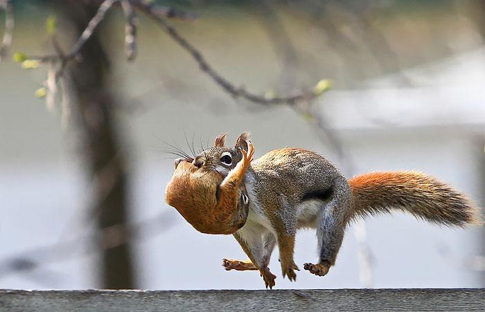 22 photos adorables pour célébrer la Journée d'appréciation des écureuils