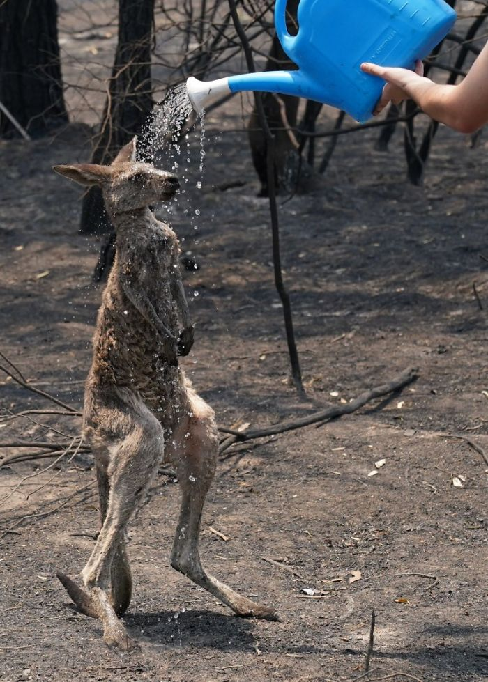 22 images qui résument l'enfer qui se déroule en Australie