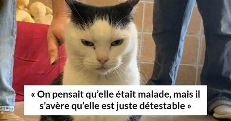 Un refuge pour animaux a mis «la pire chatte du monde» en adoption et les gens adorent sa description