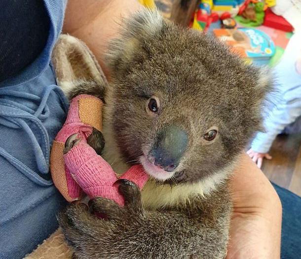 Robert Irwin a eu du mal à retenir ses larmes tout en discutant de l'impact des feux de forêt en Australie