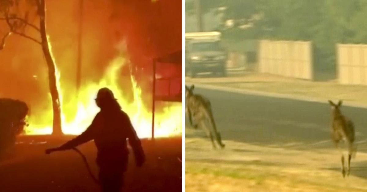 Près d'un demi-milliard d'animaux sont morts dans les feux de forêt en Australie depuis septembre