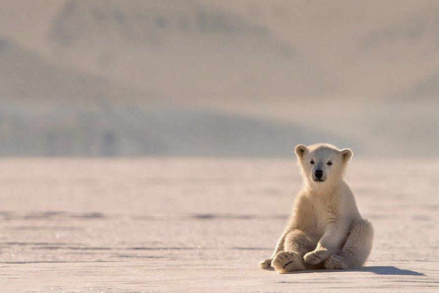 21 bébés ours polaires mignons pour célébrer la Journée internationale de l'ours polaire