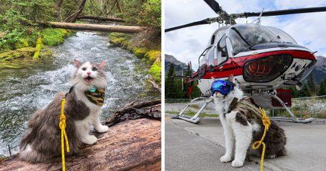 Voici Gary, le chat alpiniste secouru qui vit toutes sortes d'aventures adorables (22 images)