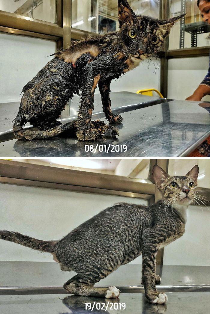Cette communauté en ligne montre à quoi ressemblaient leurs chats adoptés avant et maintenant et c'est attendrissant (22 images)