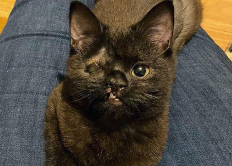Cette chatte à un oeil se cherche une maison