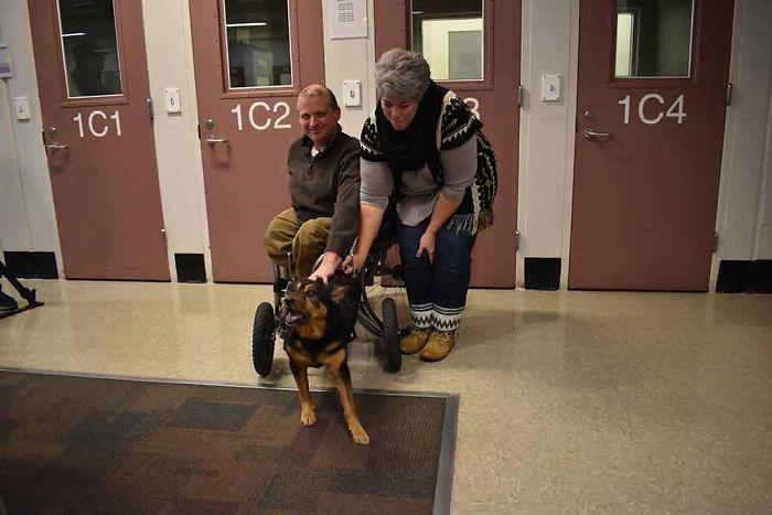 Ce chien handicapé qui a été retourné 4 fois a finalement été adopté par quelqu'un qui le comprend parfaitement