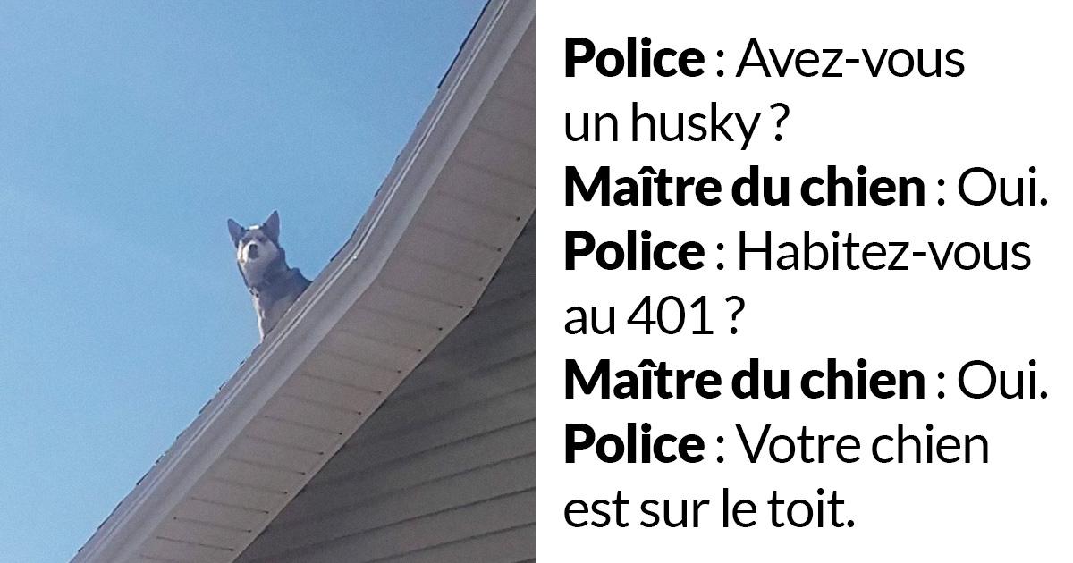 Une policière a appelé un gars pour l'informer que son husky était assis sur le toit de sa maison et lui a fourni des preuves hilarantes