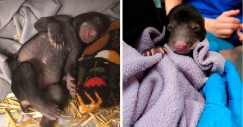 Un chien a ramené un bébé animal à la maison, et il s'avère que c'était un ourson