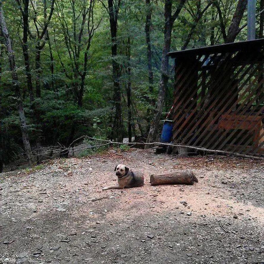 Cette illusion d'optique d'un «animal mutant» est en fait un chien mignon qui regarde vers le haut