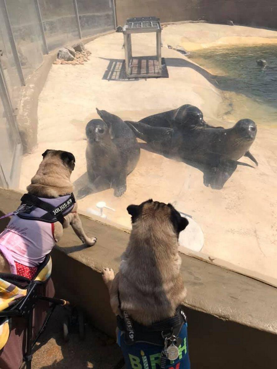 Ce chien saucisse et ce phoque sont devenus meilleurs amis après leur rencontre en vacances