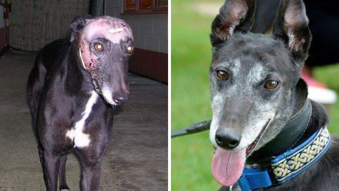 22 photos de chiens avant et après l'adoption qui a changé leur vie (nouvelles images)