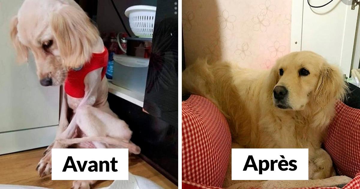 22 Photos De Chiens Avant Et Apres L Adoption Qui A Change Leur Vie Nouvelles Images Ipnoze