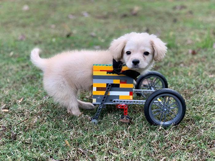Ce chiot abandonné a eu une seconde chance de vivre une vie heureuse avec un fauteuil roulant LEGO fabriqué par un garçon de 12 ans
