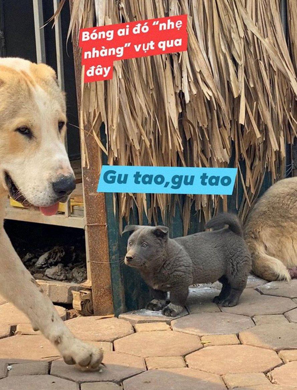 Ce chiot ressemble à un hybride entre un chat et un chien et il fait les grimaces les plus farfelues