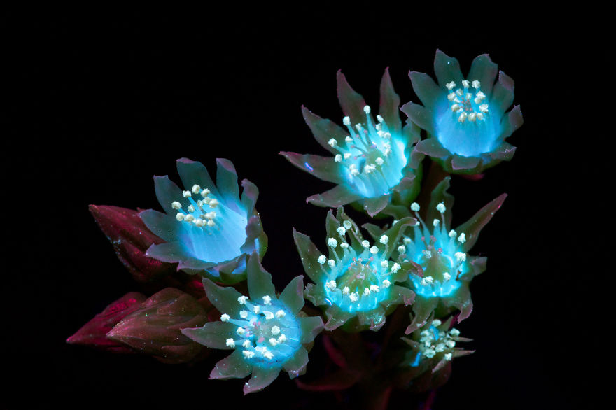 J'ai photographié la lumière invisible qu'émettent les plantes (33 images)