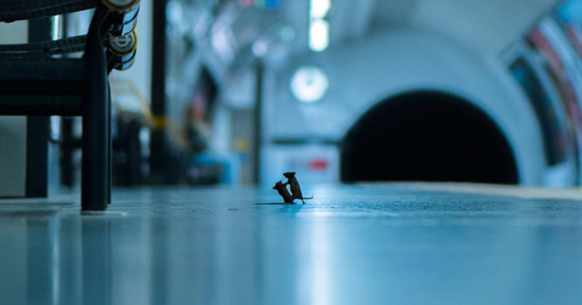 Ce combat de souris dans le métro a remporté le prix du public du photographe animalier de l'année