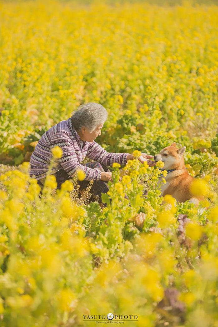 Cette grand-mère et son shiba ont été capturés par son petit-fils en 22 clichés attendrissants