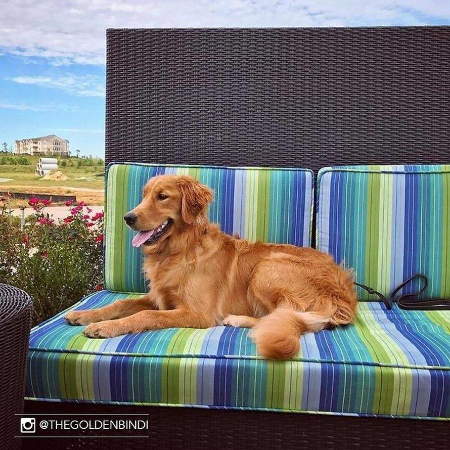 Cet hôtel permet à ses clients de s'occuper de chiens pendant leur séjour, et plus de 30 toutous ont déjà été adoptés