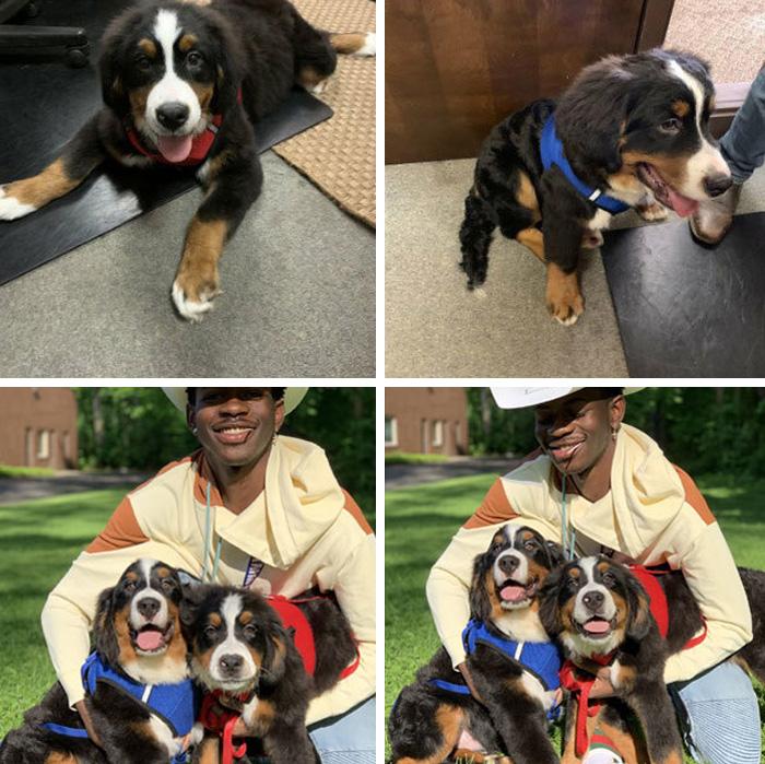 22 images de chiens sympas qui vont rendre ta journée plus agréable (nouvelles images)