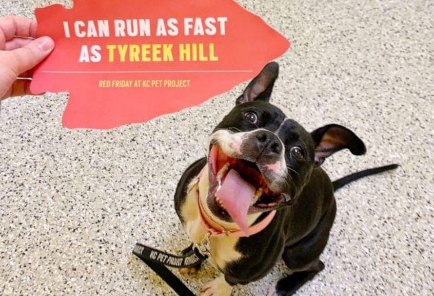 Ce gagnant du Super Bowl a célébré sa victoire en payant les frais d'adoption de tous les chiens d'un refuge