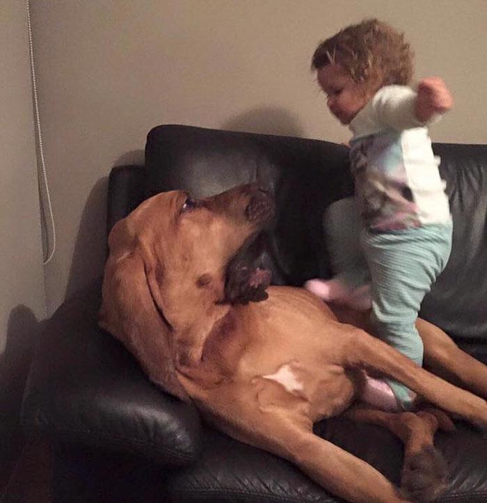 Des gens qui en ont assez des autres qui permettent aux enfants de maltraiter les animaux expliquent à quel point c'est stupide et dangereux