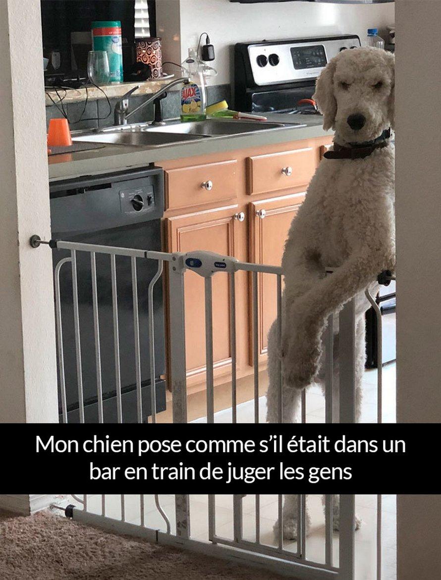 22 photos de chiens avec des commentaires hilarants (nouvelles images)