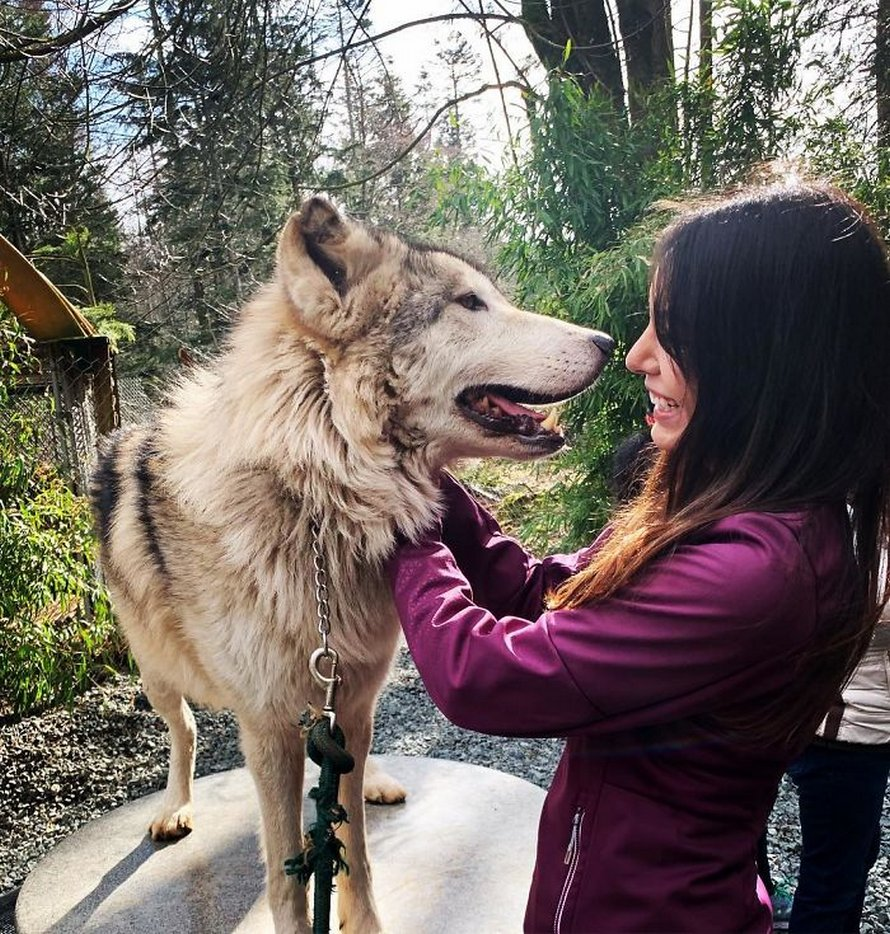 Il y a plein de gentils loups sur cette île et tu peux la visiter (22 images)