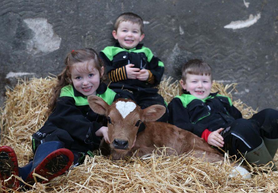 Topic des bonnes nouvelles - Page 20 Vache-coeur-sur-tete-nee-saint-valentin-001