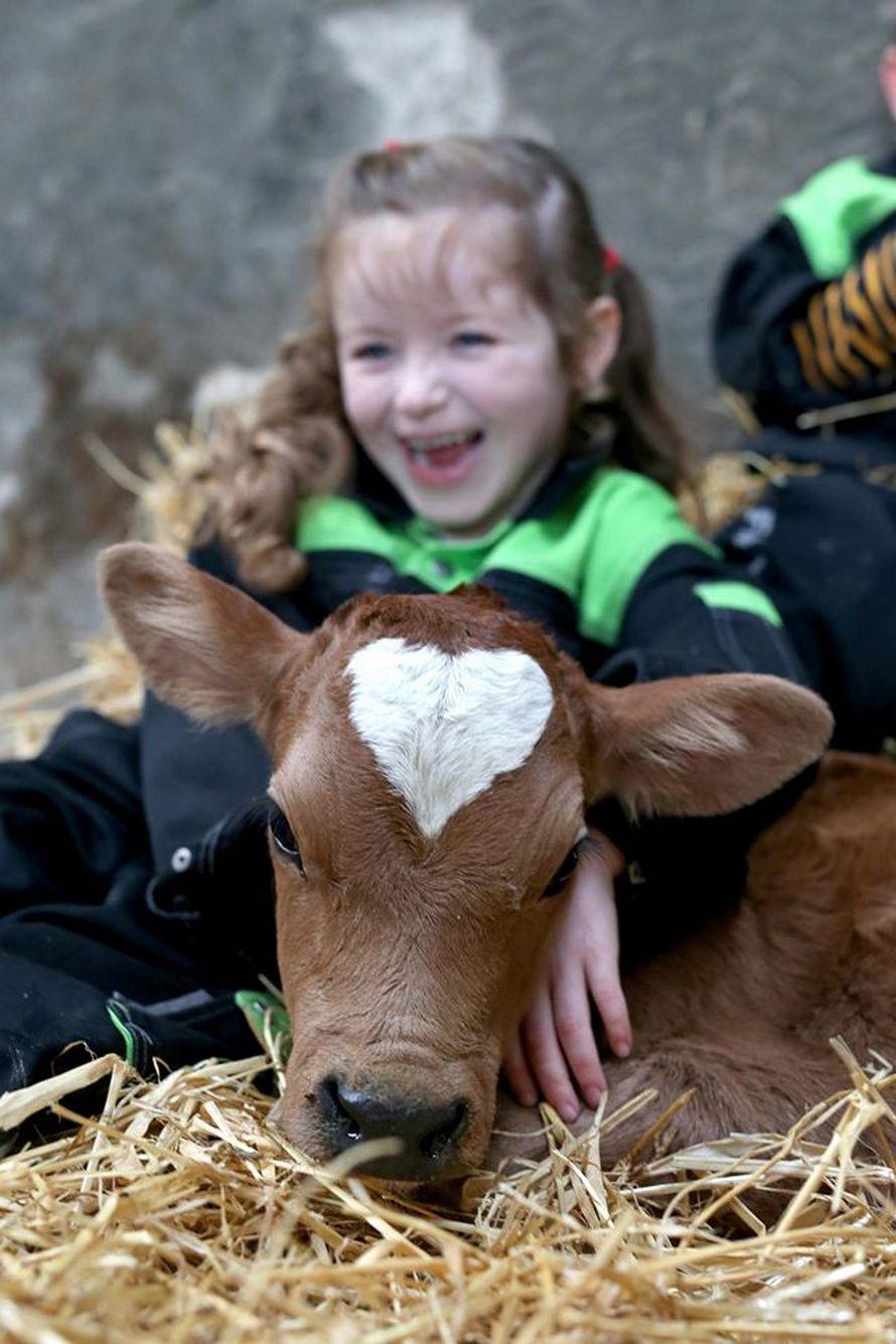 Topic des bonnes nouvelles - Page 20 Vache-coeur-sur-tete-nee-saint-valentin-002