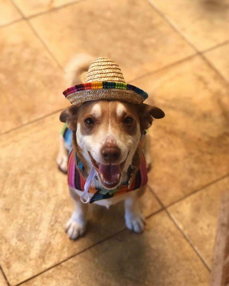 Une famille a organisé une fête d'anniversaire surprise pour son vieux chien de 13 ans et il n'arrive pas à croire qu'ils n'ont pas oublié