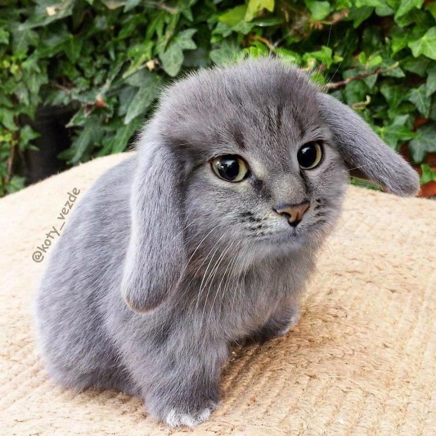Une personne a imaginé à quoi ressembleraient des choses si elles avaient une face de chat et le résultat est drôle, mais perturbant