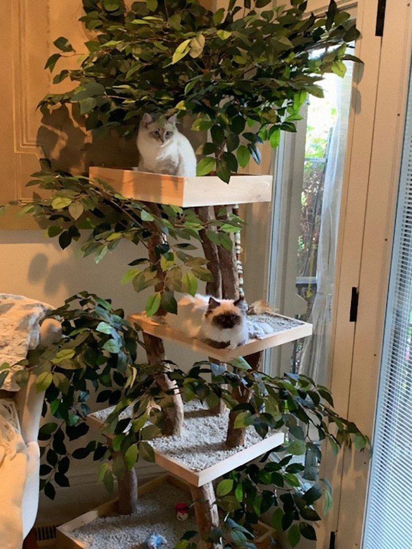 Il existe des arbres à chat qui ressemblent à de vrais arbres et ils sont magnifiques