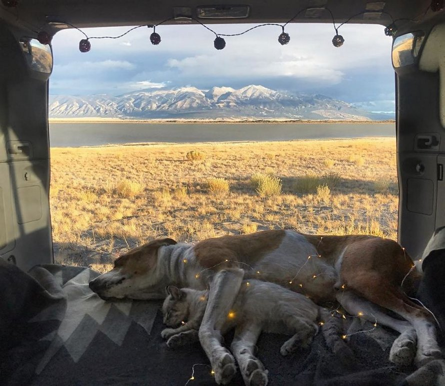 Ce chat et ce chien adorent voyager ensemble et ces photos d'eux sont épiques