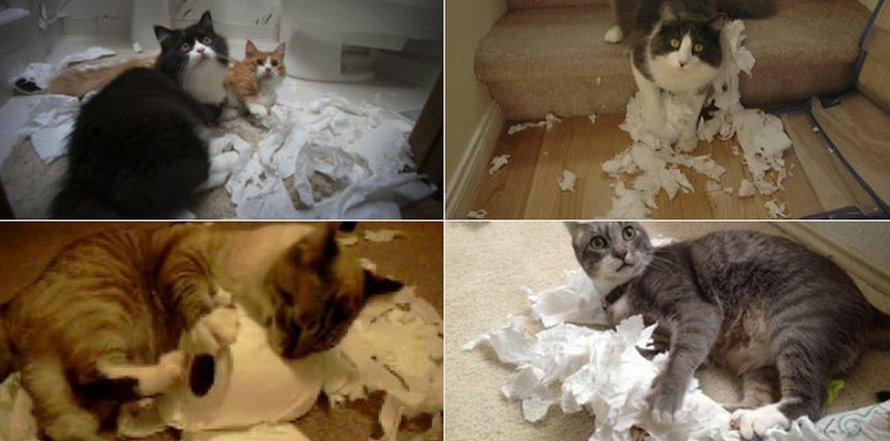 Des gens partagent des photos de leurs chats en confinement et voici les 22 meilleures