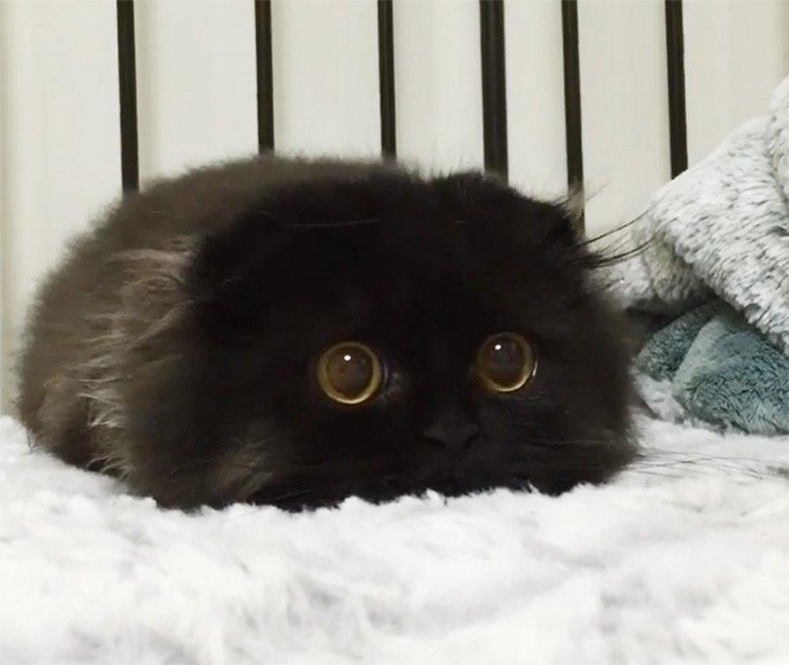 22 photos adorables de chats noirs pour montrer qu'ils n'ont rien à voir avec la malchance