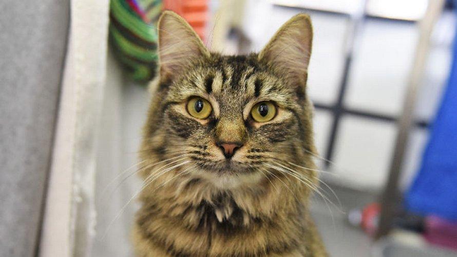 Des employés d'un refuge ont organisé une fête d'anniversaire pour cette chatte en espérant que quelqu'un l'adopte, mais personne ne s'est présenté