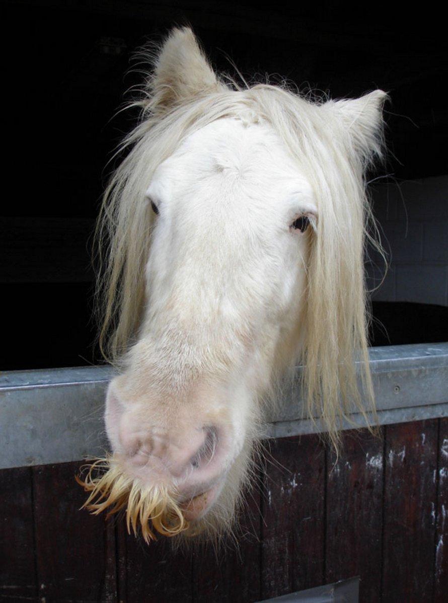 Si jamais tu es triste, souviens-toi que les chevaux peuvent avoir des moustaches