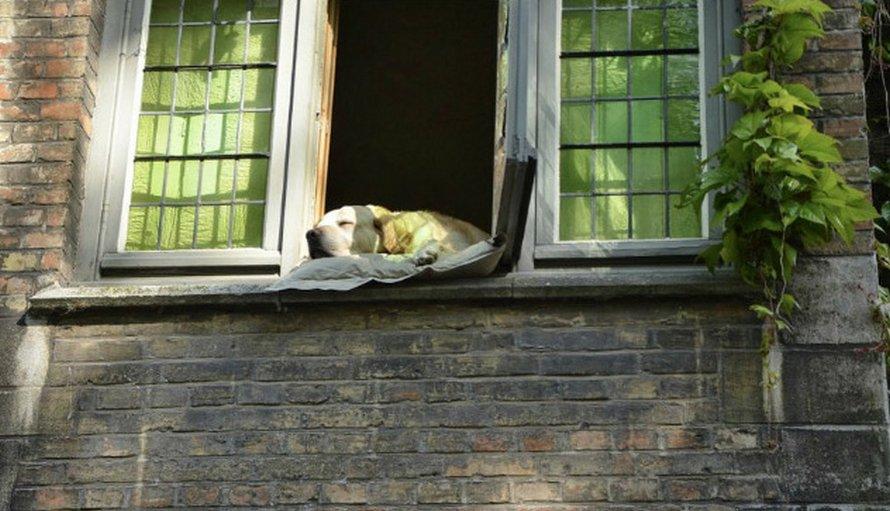 Après le décès du «chien le plus célèbre de Bruges», des gens ont partagé des photos de lui au fil des ans