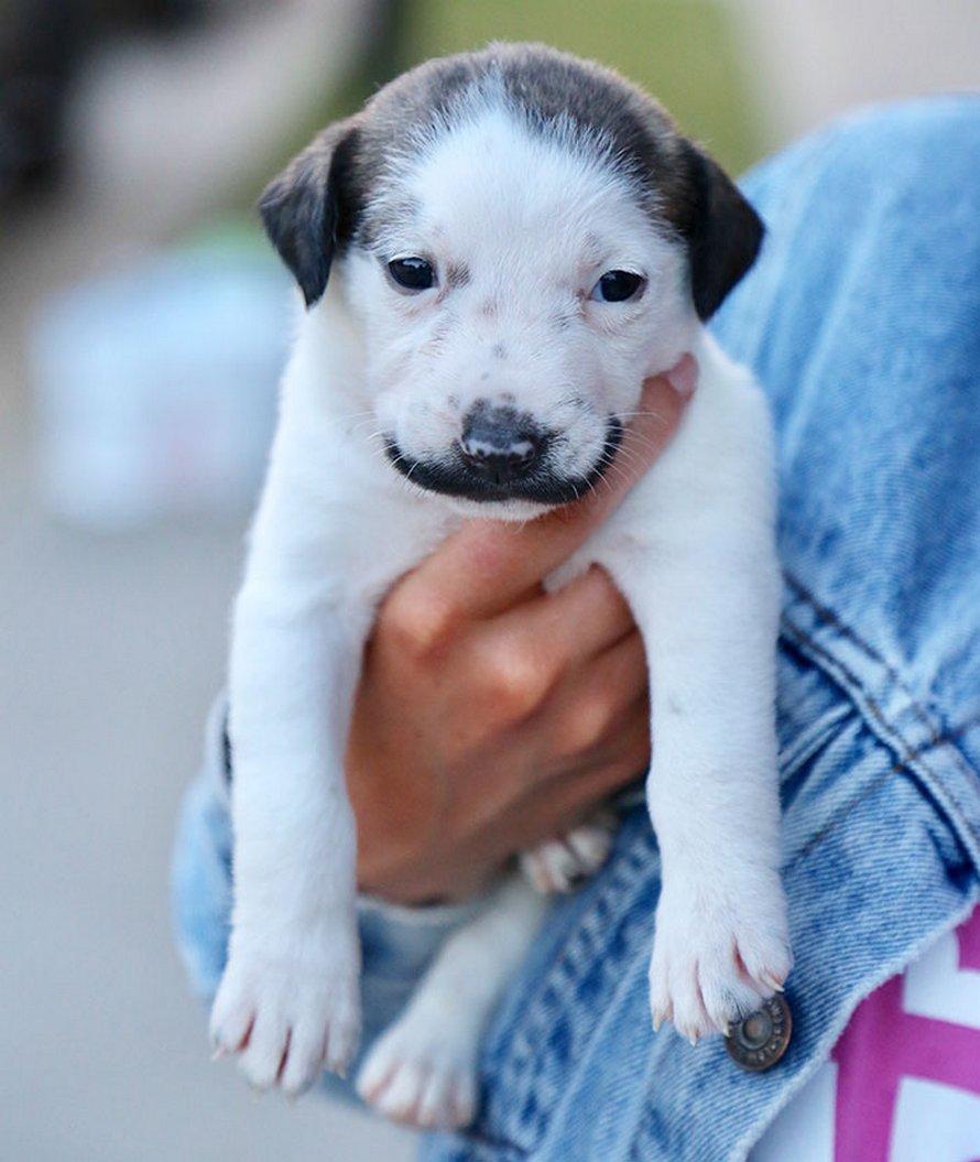 Voici Salvador Dolly, le chiot le plus mignon qui porte la moustache